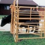 calvingpen